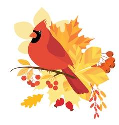 Cardinal bird vector