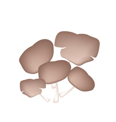 Fresh Oyster Mushrooms on White Background vector image vector image