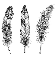 Artistic sketch of feather vector