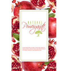pomegranate vertical banner vector image