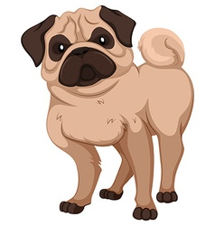 Pug with cute face vector image