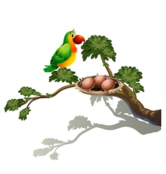 A parrot and a nest vector image vector image