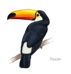 toucan hand drawn vector image