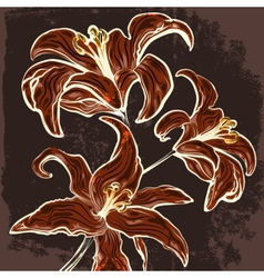 The lillies branch drawn in vintage style vector image