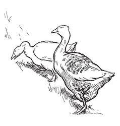 Two geese vintage vector
