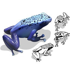 Blue poison dart frog set vector