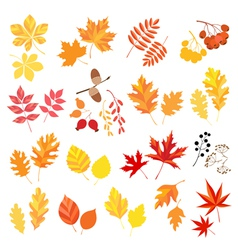 Autumn leaves and berries vector image