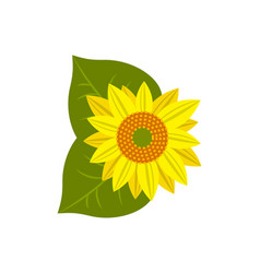 flower of sunflower icon vector image