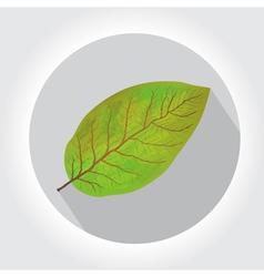 Tobacco leaf icon vector