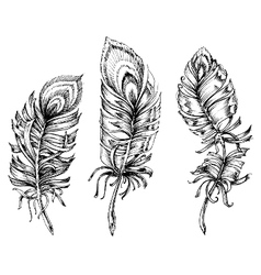 Artistic sketch of feather vector image