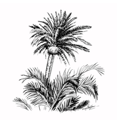 Hand drawn sketch palm vector