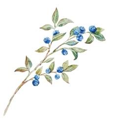 Watercolor blueberries vector