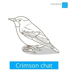 Crimson chat bird coloring book vector