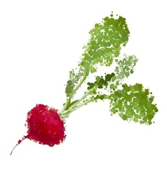 Fresh radishes of blots vector
