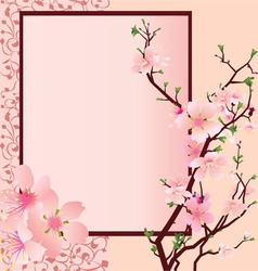 Sakura flowers vector