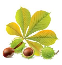 Autumn chestnuts vector