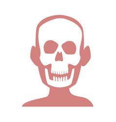 human skull skeleton x-ray medicine test vector image