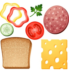 Ingredients for a sandwich vector image
