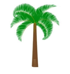 Green palm on a white background vector image vector image