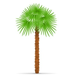 palm tree 01 vector image vector image