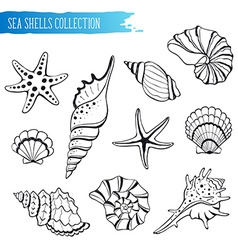 Seashells collection vector image vector image