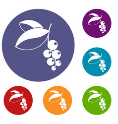 Currant berries icons set vector