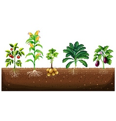 Different kinds of plants growing in the garden vector