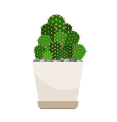 Cactus house plant in white flower pot vector