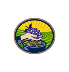 Hand holding grapes raisins oval woodcut vector