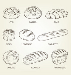Outline set of different kinds of bread vector
