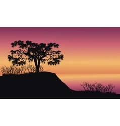 Trees at sunrise scenery vector