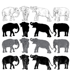 Set of wild elephant isolated vector