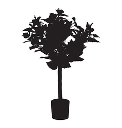 Office and house rose tree silhouette vector