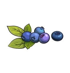 Ripe blueberries isolated on white background vector image