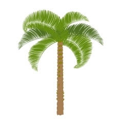 Green palm on a white background to perform vector
