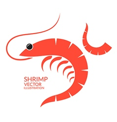 Shrimp vector