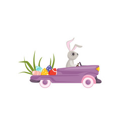 Cute bunny driving violet vintage car decorated vector