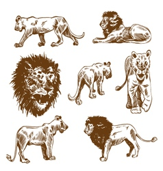 Hand drawn lion set vector