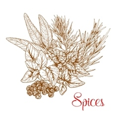 Spicy herbs and herbal spice seasonings sketch vector