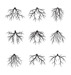 Collection of black roots vector