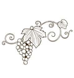 Grape vine branches ornament vector