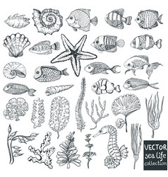 Beautiful sea life collection for design vector