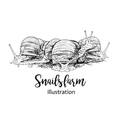 Hand drawn set of snails vector image