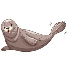 Seal with gray skin vector image