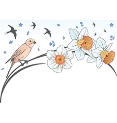 Bird and narcissus vector