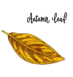 autumn yellow leaf isolated on white background vector image
