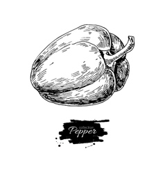 Pepper hand drawn Vegetable vector image