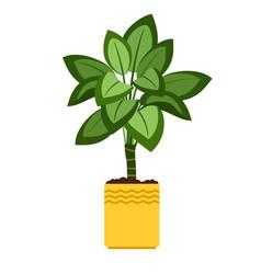 Dieffenbachia house plant in flower pot vector