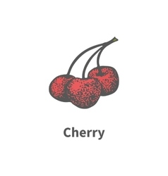hand-drawn ripe red juicy cherry on branch vector image vector image