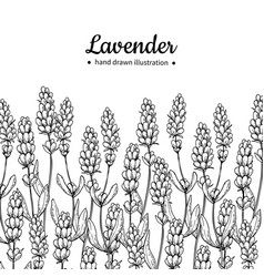 lavender drawing border isolated wild vector image